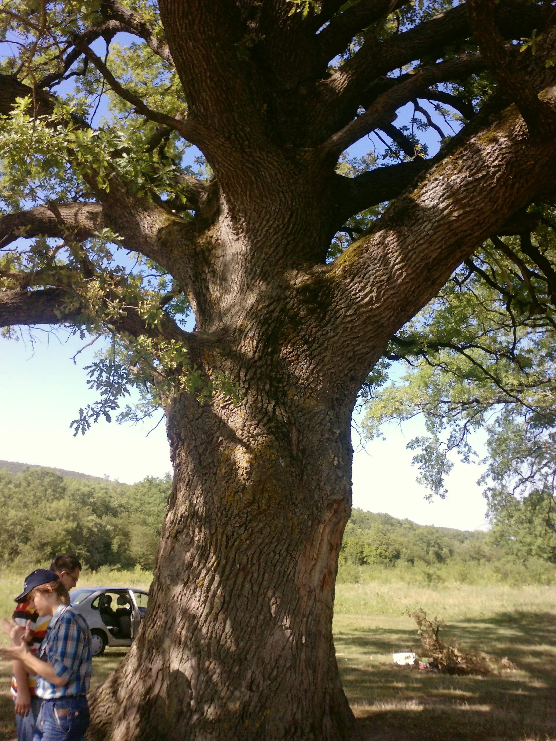 Травы, коренья, смолы в магических ритуалах --3