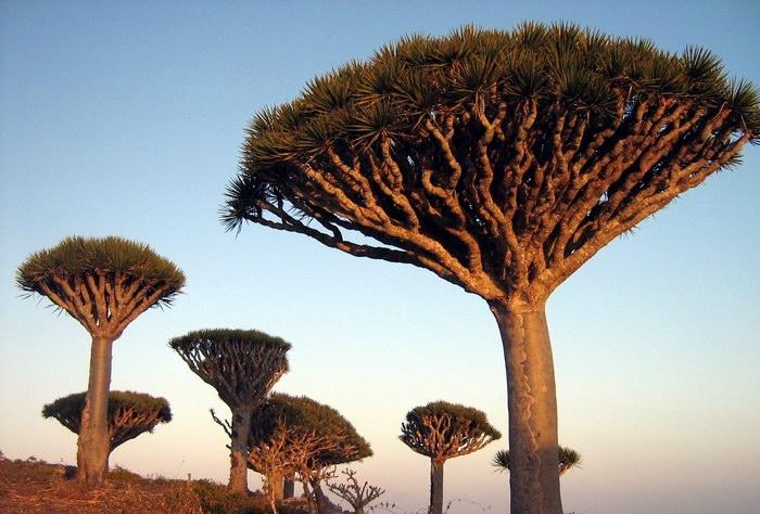 Травы, коренья, смолы в магических ритуалах -1