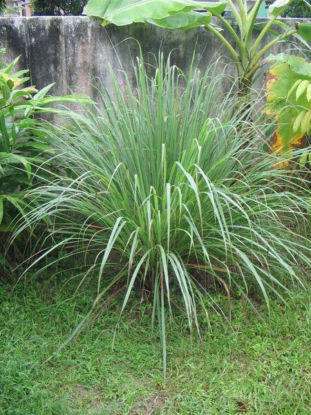 Травы, коренья, смолы в магических ритуалах 0331828385