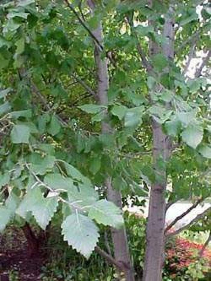 Травы, коренья, смолы в магических ритуалах 12450614589511