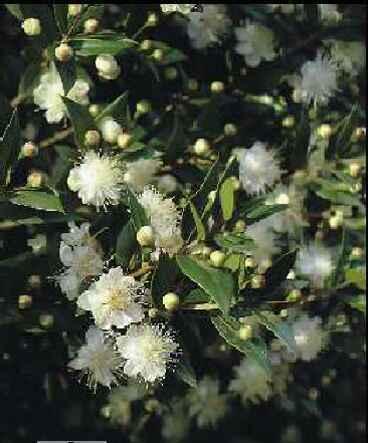 Травы, коренья, смолы в магических ритуалах 1298159058_168554763_8---