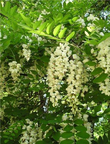 Травы, коренья, смолы в магических ритуалах 2530db18499d