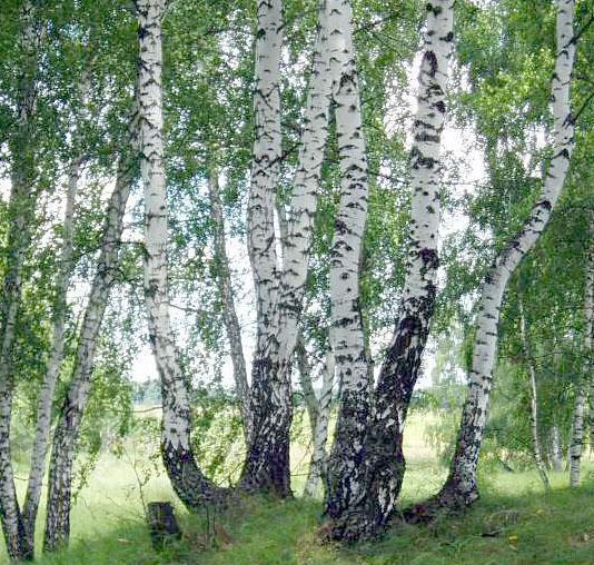 Травы, коренья, смолы в магических ритуалах 2728
