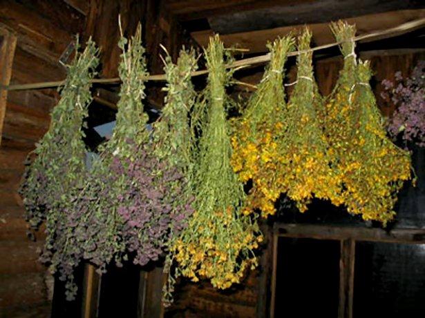 исодбзование трав в магических целях, рецепты ведьмы, колдовство, ритуалы, заговоры