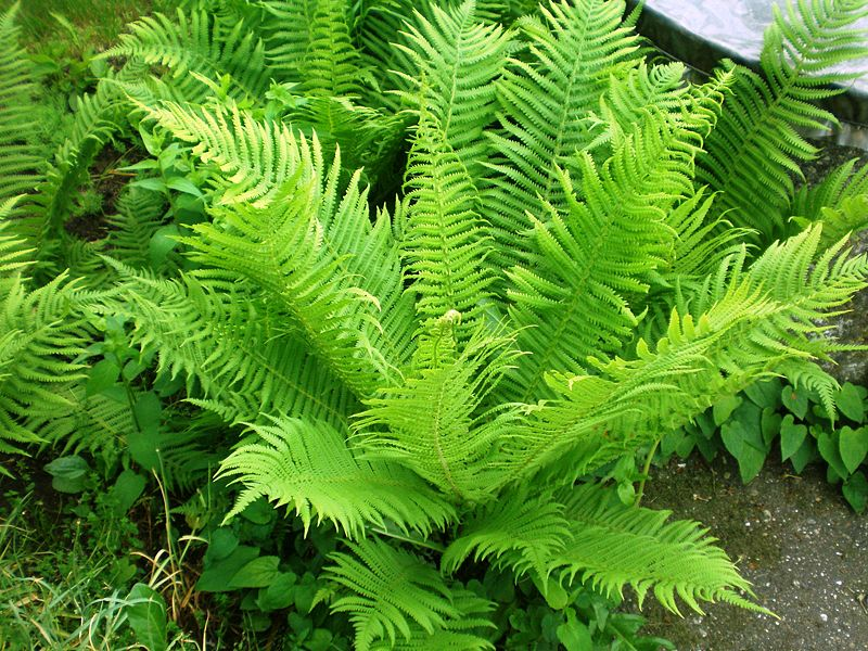Травы, коренья, смолы в магических ритуалах 75517728_large_3779070_pJonpapartis001_1_