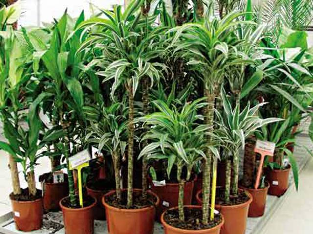 Травы, коренья, смолы в магических ритуалах 8afaa511