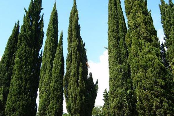Травы, коренья, смолы в магических ритуалах 95728842