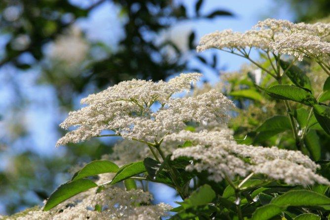 Травы, коренья, смолы в магических ритуалах _