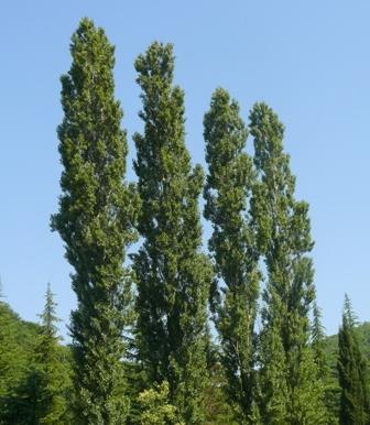 Травы, коренья, смолы в магических ритуалах Clip_image007
