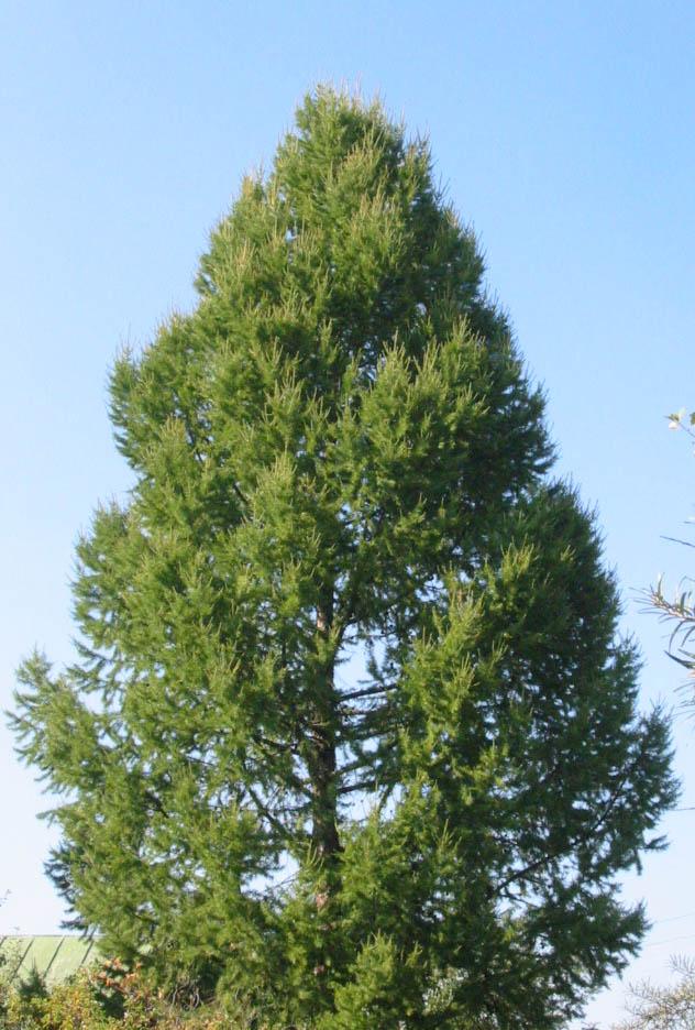 Травы, коренья, смолы в магических ритуалах Larchtree