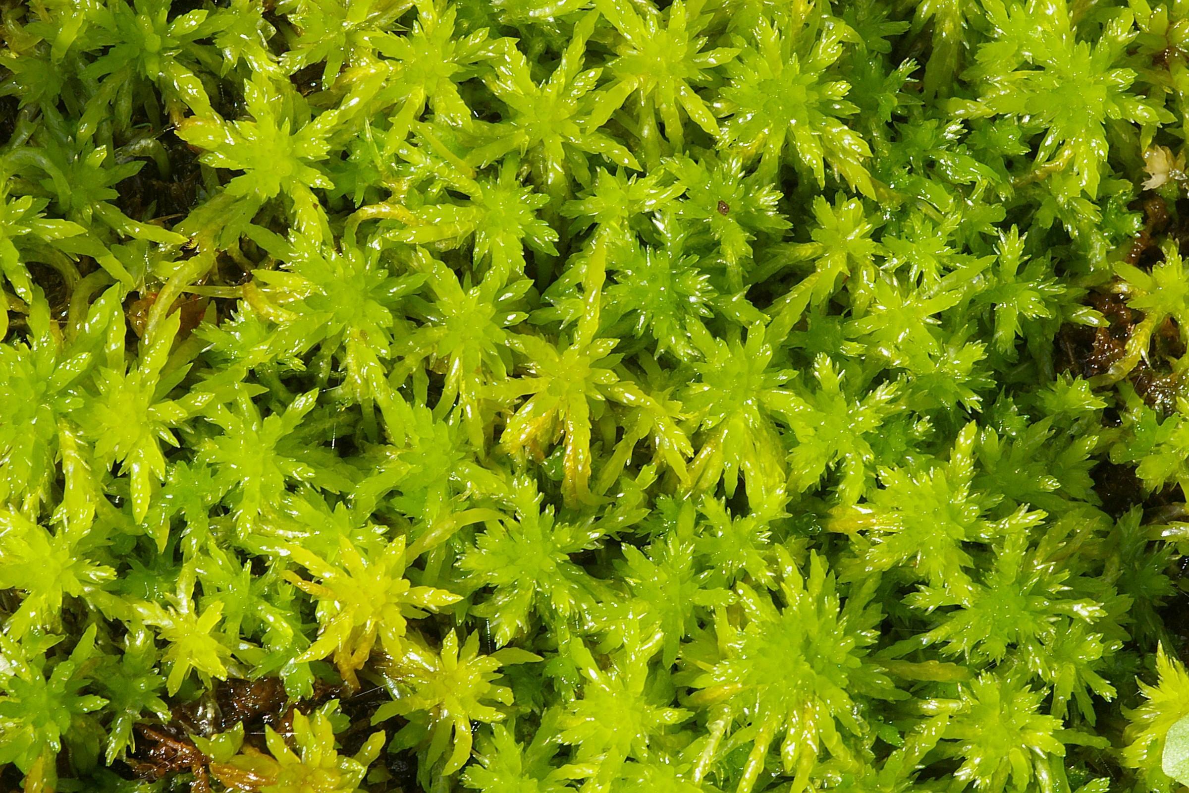 Травы, коренья, смолы в магических ритуалах Sphagnumfallax